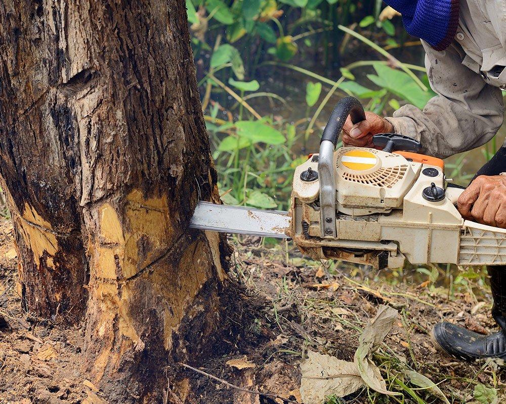 Tree Service Sand Springs - Tree Removal