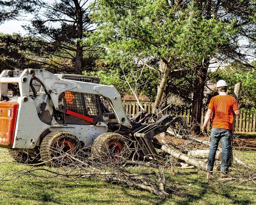 Tree Service Sand Springs - Arborist