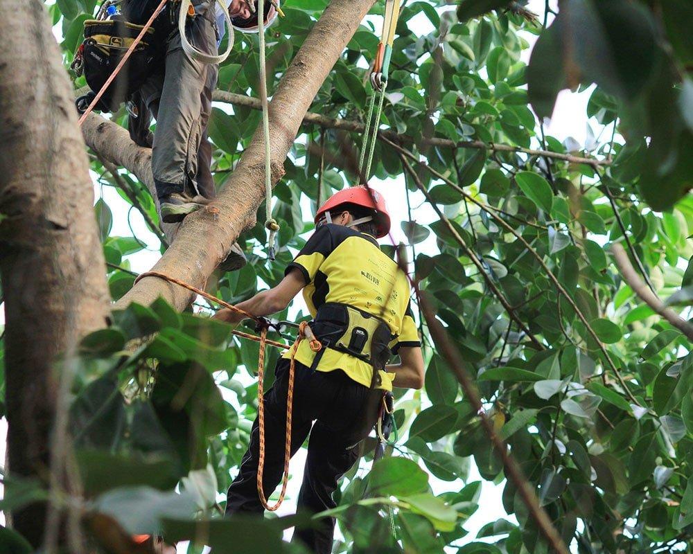 Tree Service Sand Springs - Emergency Tree Removal