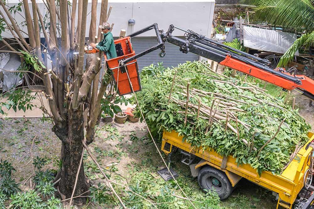 Tree Service Sand Springs - Tree Pruning
